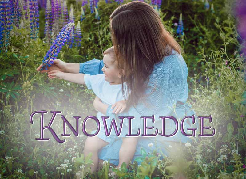 23rd April 2021: Our Daily deLIGHT~6th Day-Knowledge