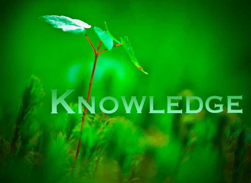 30th April 2021: Our Daily deLIGHT~6th Day-Knowledge