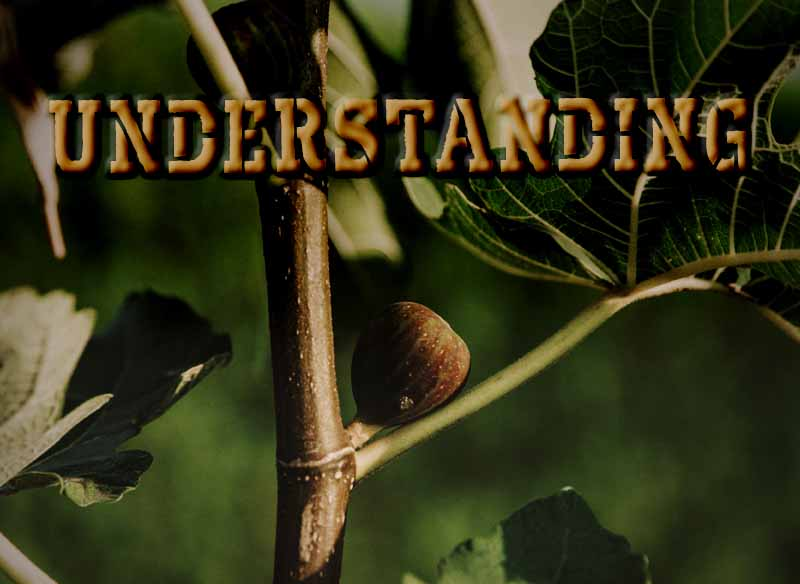 5th April 2021: Our Daily deLIGHT~2nd Day-Understanding
