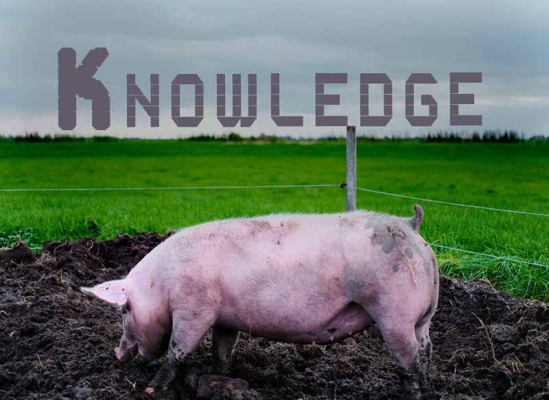 9th April 2021: Our Daily deLIGHT~6th Day-Knowledge